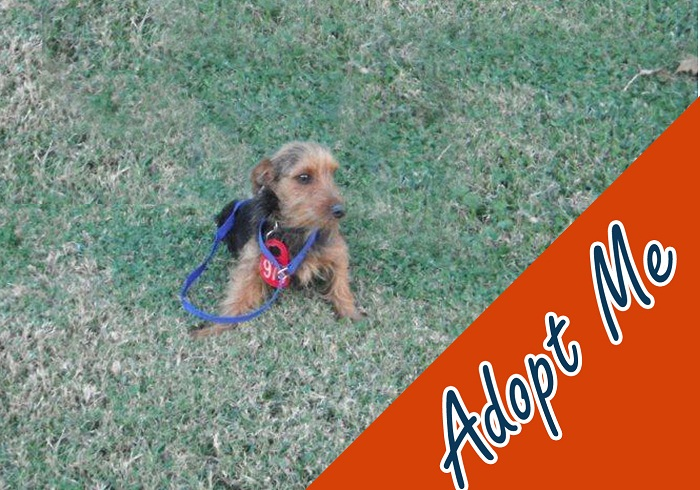 I love to watch my friends run and play; I often think to myself hopefully I will be adopted someday.  I am a loving little 1-year-old male red Terrier mix they call Grimore and I will be waiting for you to come and adopt me!  My ID# is A577965.