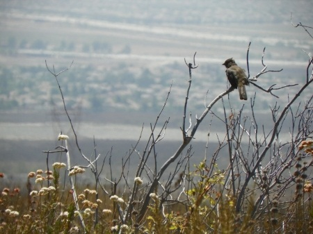 etiwanda preserve