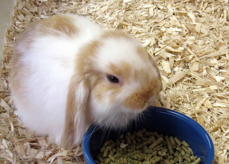 bunny 9-26-14