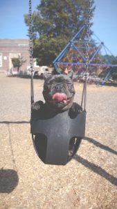 dog july 4