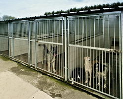 Animal Establishment Permits (Kennels)