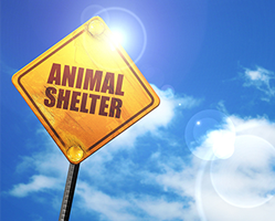 Other Animal Shelters
