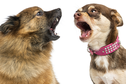 how to stop nuisance dog barking