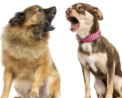 Nuisance Animal Noise (Barking Dogs)