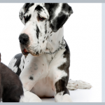 Mega Pet Adoption Event