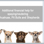 Grant and donation to support spaying and neutering of dogs