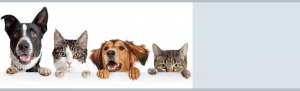 Animal Care and Control Modified Service
