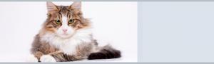 Spay & Neuter Your Cat