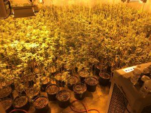 Yucca Valley Indoor Grow